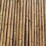 Gebruik een bamboestok van Growexpert als versiering in je tuin