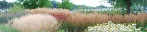 planten-bloemen-tuin-webshop