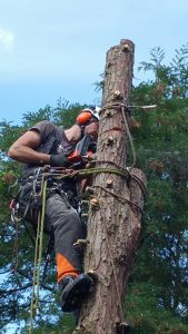 boom kappen in Eindhoven